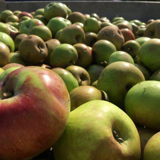 Appels klaar voor persen